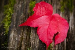 Signs of Fall