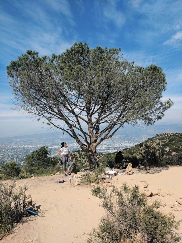 Hiking in LA - Cahuenga Peak and the Wisdom Tree
