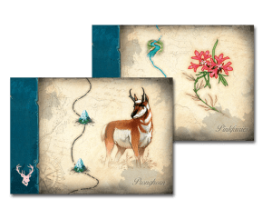 Discoveries cards with animal and plant speciies