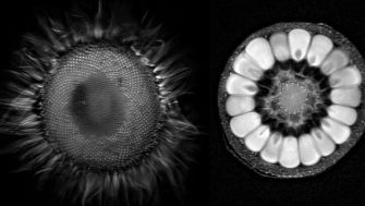 What do fruits and vegetables look like inside an MRI?