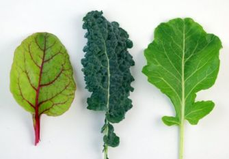 Leafy greens influence gene expression, boosting native immune response to fight disease