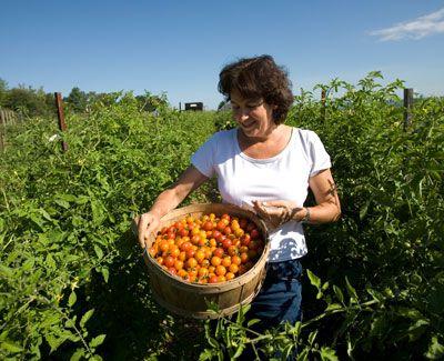 organic-farming-4