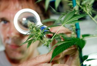Scientists Know More About Cannabis as a Medicine Than Many FDA Approved Pharmaceuticals
