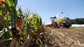 Supreme Court hands Monsanto victory over farmers on GMO seed patents, ability to sue