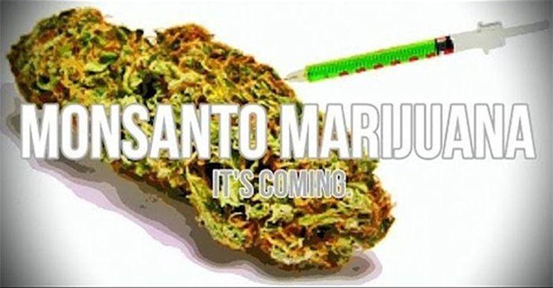 gmo-marijuana-monsanto