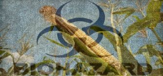 Scientific basis for GMO crops is false