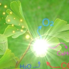 Carbon Dioxide Fertilization Effect and Greening of Deserts