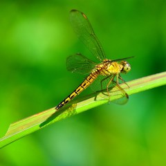 Small Predator Diversity Plays a Significant Role in the Spread of Infectious Diseases