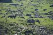 Betaab Valley - grazing