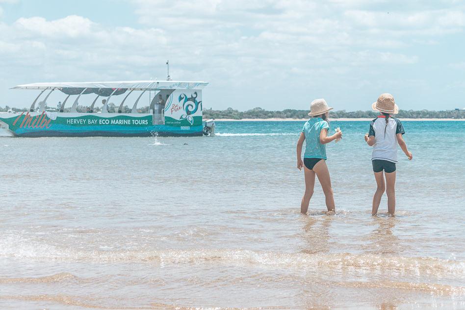 Hervey Bay Eco Marine Tours Boat Australia Environment
