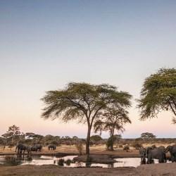 Miracle africain Botswana séjour voyage que faire activité paysages