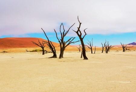 namibie parc national de skeleton coast walvis bay