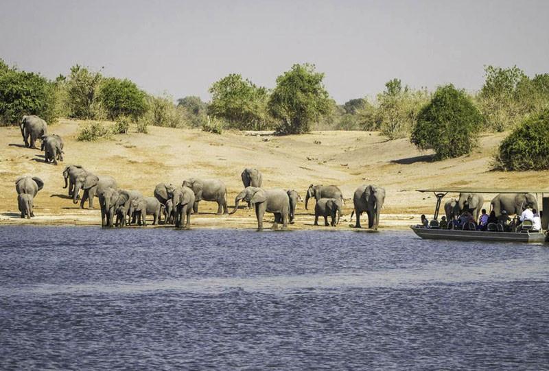 safari au botswana afrique elephant