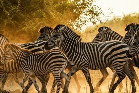 safari au botswana afrique elephant tanzanie