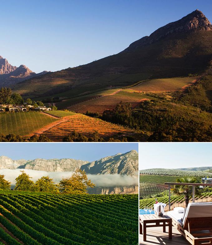 Delaire Graaf Estate Le cap vignoble Afrique du sud