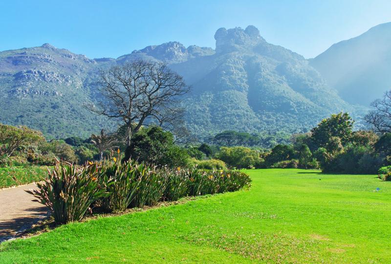 Jardin Botanique de Kirstenbosch Le Cap Afrique du sud a voir