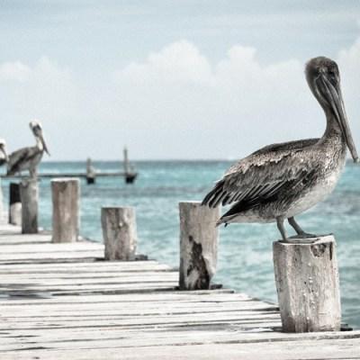 5072-bird-half