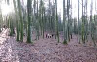DeepTimeWalk forest bathing