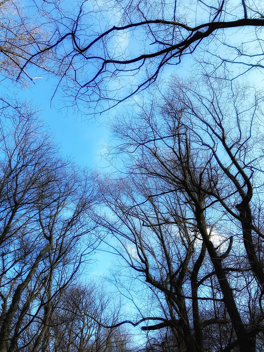 Blue sky, winter trees