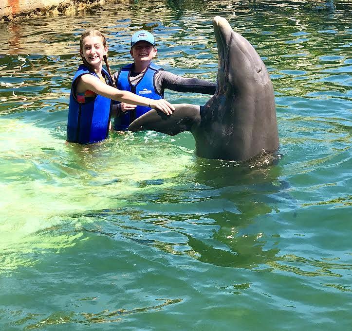 swim with dolphins in key largo