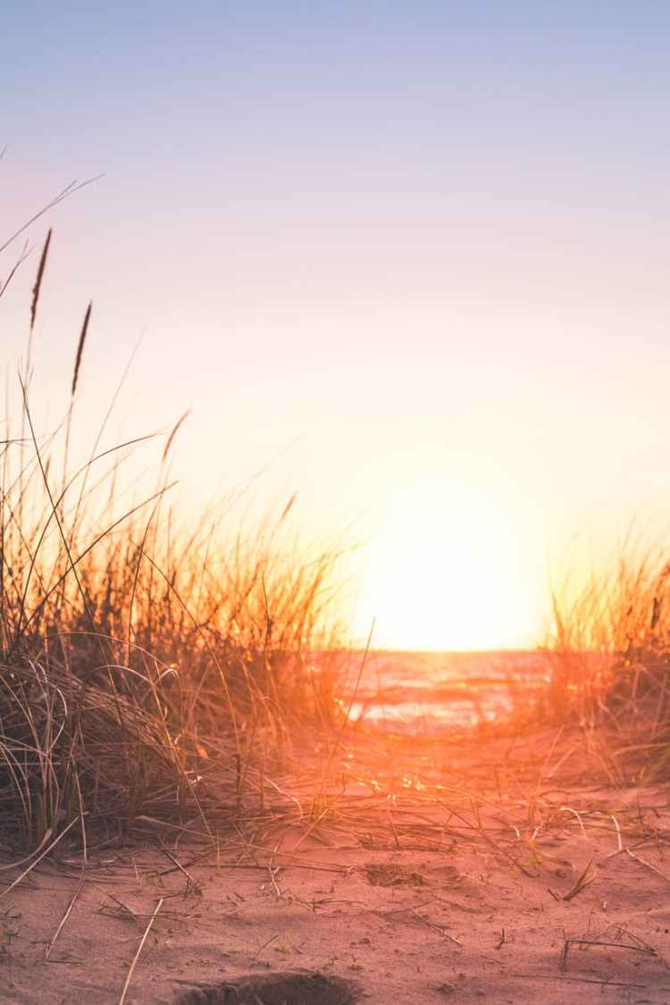 silhouette of beach grass