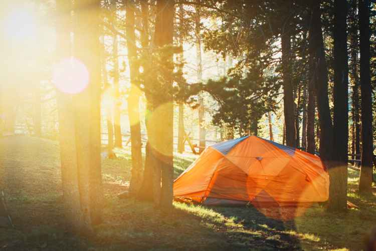 photo of tent in forest