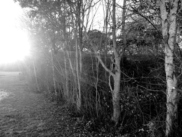 IMG_4517-trees bw