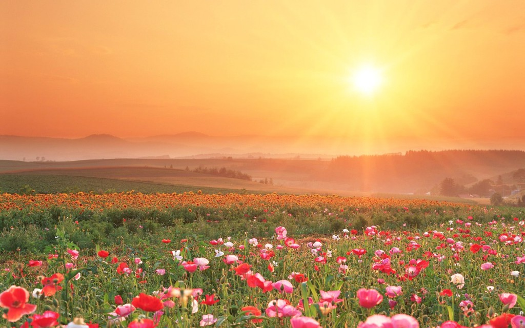 field-of-flowers-sunset