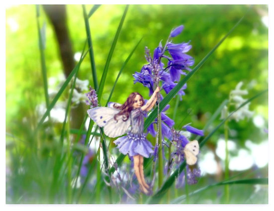 bluebellfairy