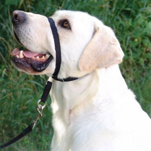 Face Collar on Dog