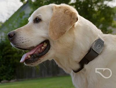 Dog Wearing GPS Tracker