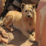 Teddi, sponsored by Inez and Alan Alves