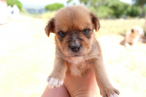 puppy-rescue-dogs-faro-algarve