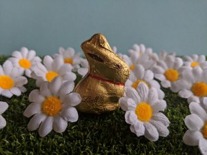 Lindt Mini Bunny surrounded by faux daisys