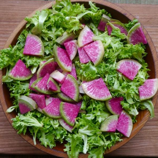 Watermelon Radish: the unsung hero of storage vegetables