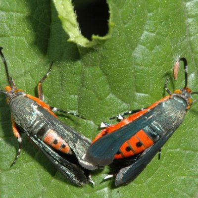 Crop Talk: How to get rid of Squash Vine Borers (and improve your harvests!)