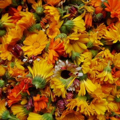 Eat the Rainbow: Edible Flowers for Beautiful Meals