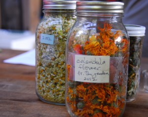 Wisdom of the Herbs: calendula and chamomile