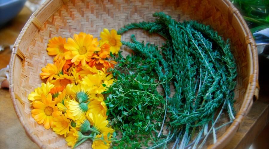 wisdom of the herbs: calendula and yarrow