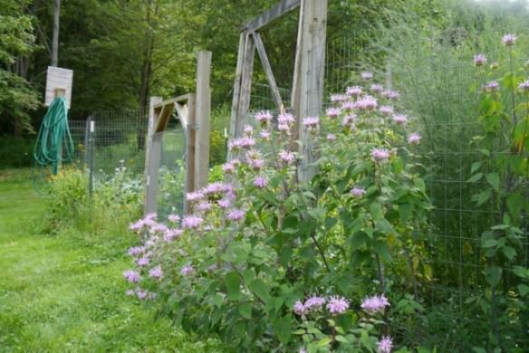 an organic garden