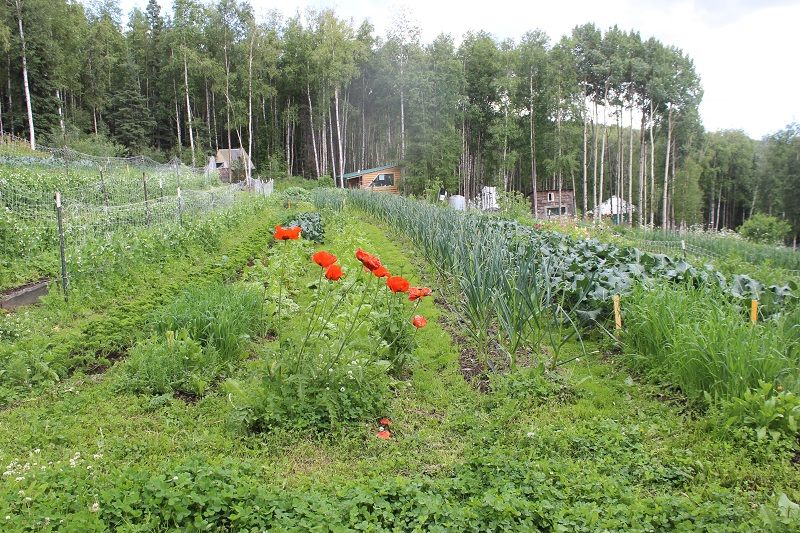 Calypso Farm and Ecology Center, interview with Susan Willsrud