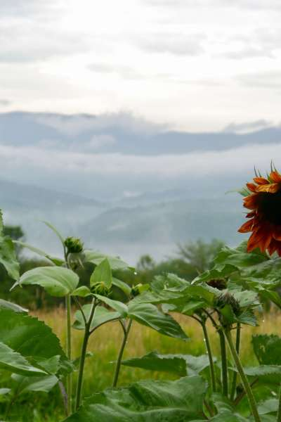 July morning at Good Heart Farmstead: unplug, plant seeds, and grow your life