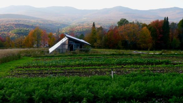 The organic fall vegetable garden