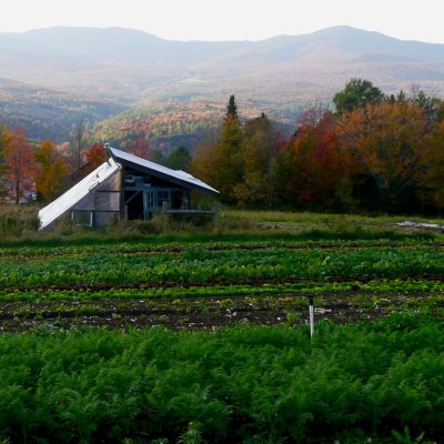 Planting for a Fall Garden Harvest