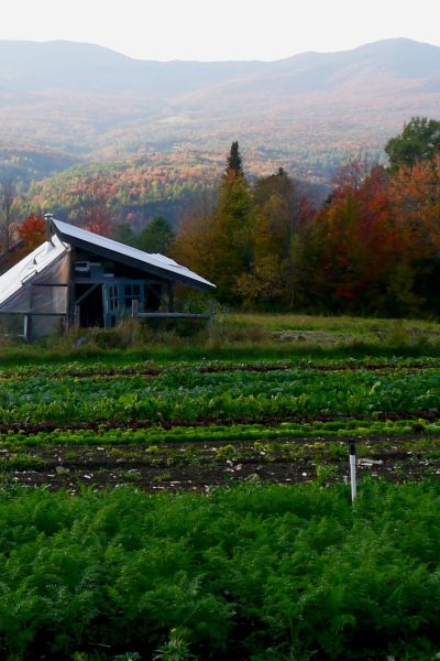 The organic fall vegetable garden