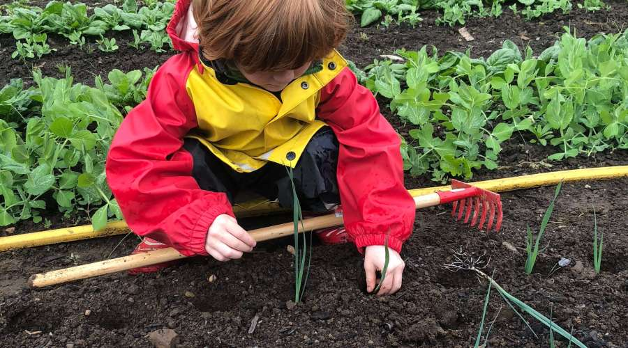 Growing a garden is one of the best ways to connect to the land and your food