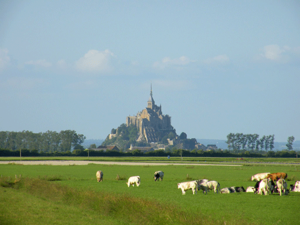 mont-saint-michel-with-cows