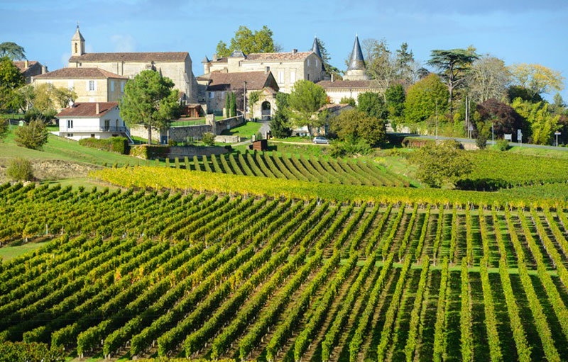 Green vineyards in Bordeaux with a castle in the background