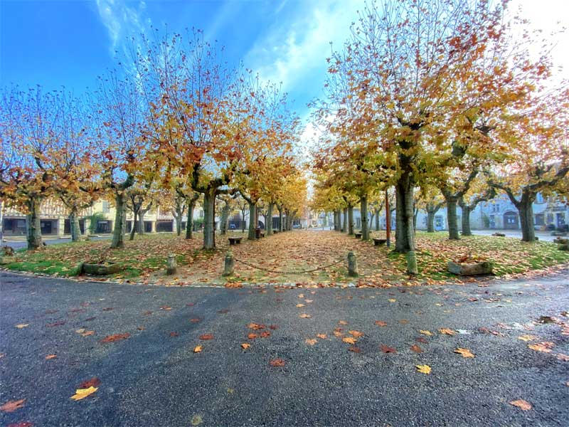 Autumn leaves fall from the trees on the round square, the only one in France at Fources in the Gers