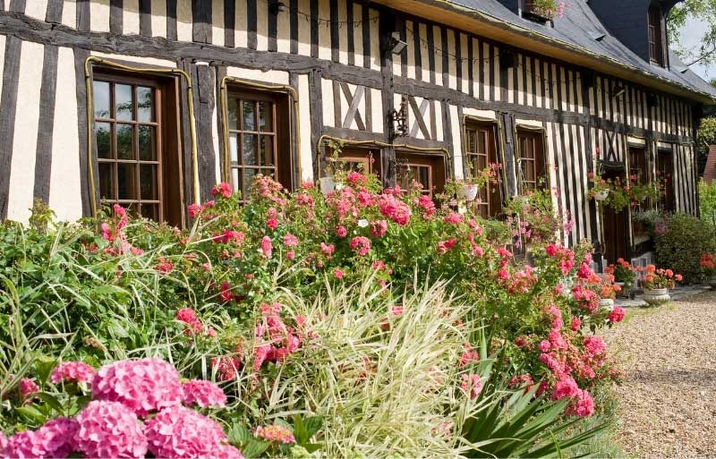 Half-timbered house in Normandy, France, bright pink flowers growing under the windows